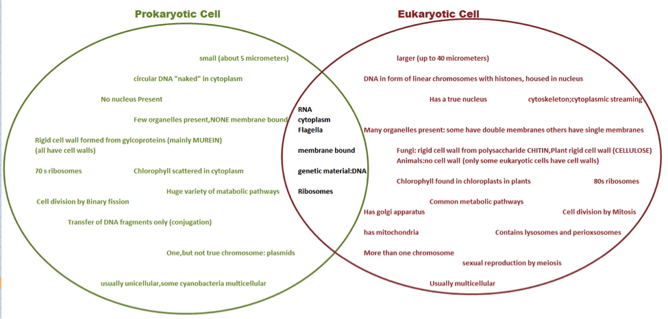 Prokaryotic And Eukaryotic Cells Worksheet 004 - Prokaryotic And Eukaryotic Cells Worksheet